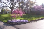 Landscaping with spring-flowering trees and perennials. (Much better planned than what you usually see, I hate to say.)