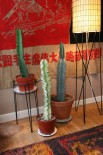 Euphorbia & Cacti - Add a nice architectural element. Arg! Hate the pots! Help!
