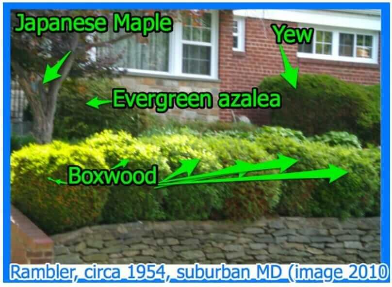 mid-century-garden