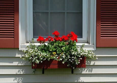 red-geraniums-in-a-window-box