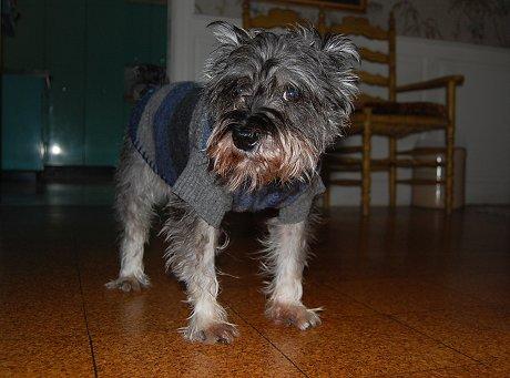 handmade dog sweater