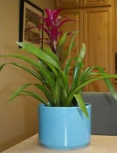 gainey ceramics cylinder planter