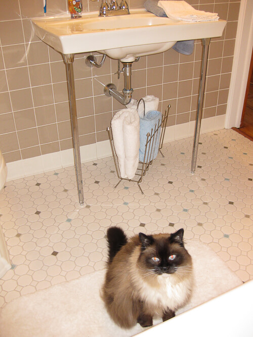 joe the cat in the new 1950s bathroom