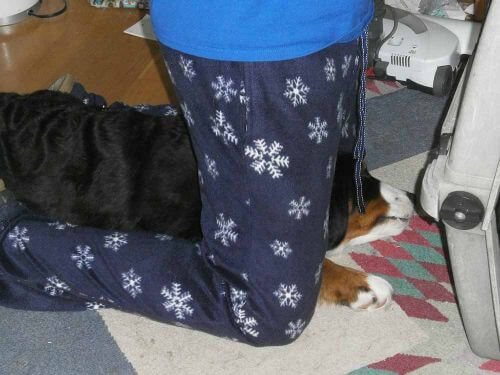 dog-helping