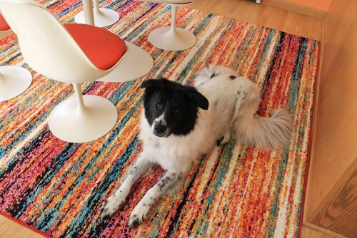 colorful rug dining room