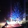 blue-tree-77f731e869701e88aba37833b0b9ff9084cf7dd4