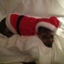 kissie-in-santa-suit-9404a5e6f9591755a417e07078edf9a9971af24e