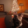 kitchkittymas-in-palm-springs-c5d225624a16a9f2f60267de9515cead80291f66