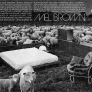 Mel-Brown-furniture-sheep-ad