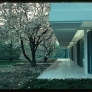 Miller-House-tree-blossoms