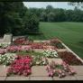 mid-century-retro-landscaping