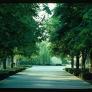 midcentury-garden