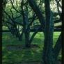 miller-house-trees