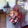 my-dog-the-stunt-double-878034131dd5d2e97735753d97675bd2ec7c296c