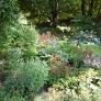 frelinghuysen-morris-flowers