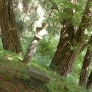 frelinghuysen-morris-statue-under-trees