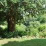 frelinghuysen-morris-tree