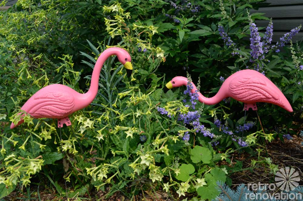 A Flamboyance Of Flamingos All Across The World In Honor
