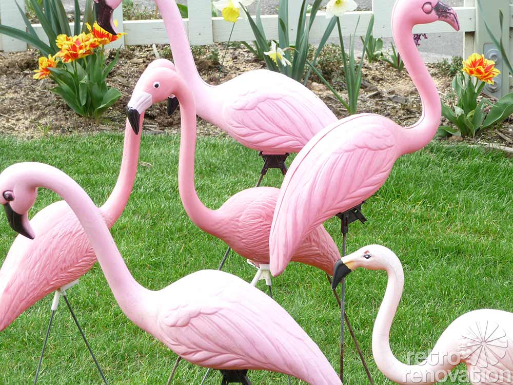 A Flamboyance Of Flamingos All Across The World Our Photo