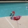cocktails-and-pool-party-at-glen-and-jacquies-2015-06-28-002-b59457dcaf863eaa40edd615772e0e2c9a52d639