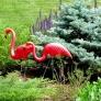 featherstone-flamingo-1