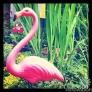 flamingo-590a878909f427d52efcfc85ce0882389010405e