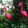 flamingoes-58a4ede6d06a1c6559c93cb6ec08cbac60a78b63