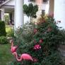 flamingos-front-close-7d137b6892a8dc98c675f2102b7b38e35496206c
