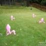 lawn-flamingos-1e45d871e7fe1c62a4d8585ec37a9cb17798280f