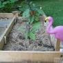 peg_leg_flamingo-054dd5688d12b89c9ba1049a1feede4a4f2ad299