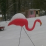 snow-pink-flamingo-f43a0de97347dac11b0b639d719ab23c805c7dac