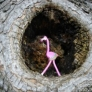 tiny-flamingo-ebfc29cf6179033a7f1cbf21a7026a4affe7b0d2