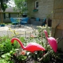 flamingos-25a308445e866f50aac6d2a9c9bd37df24e33645