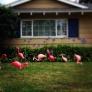 flamingos-54a799e6682612d73e599cf182abb708cfca1247