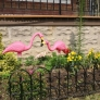 pink-flamingos-9febabff3dcd1c6979ac151cb074e7b8f1f112d8