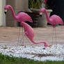 pinkflamingoes-a7986b017052a32cd8798a58713ed89ff5e6cdb0