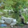 pond_kitty-fd2baf7b486abec8707c8254588194ad2579ab15