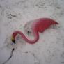 windblwn-bird-9cd846f4478cb67b1547ca382ee3c8363428a0ce