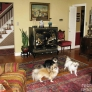 tv-cabinet-dogs