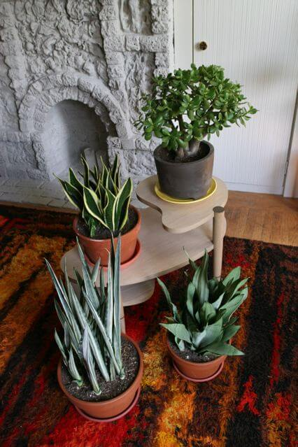 house plants for a mid century modern house