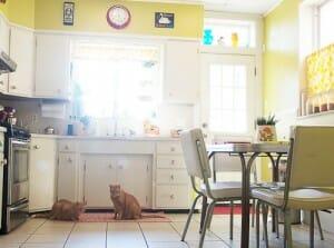 white kitchen with yellow walls