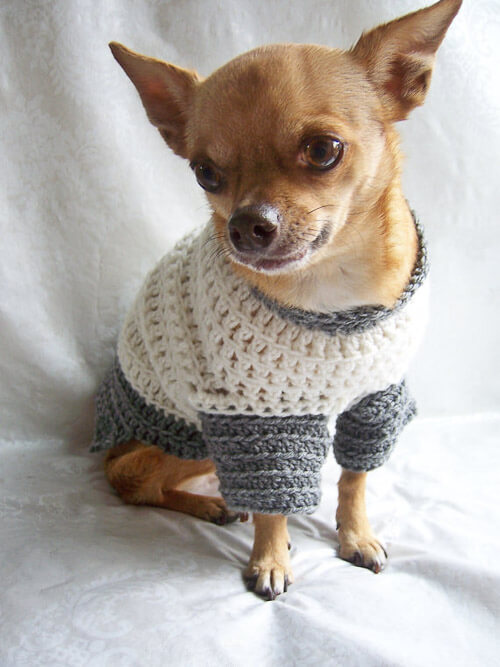 handmade dog sweater evie the chihuahua