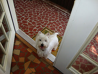 mcduff the west highland terrier watchdog extraordinaire