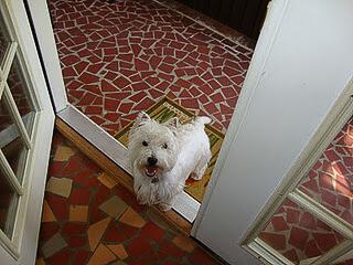 mcduff the west highland terrier watchdog extraordinaire