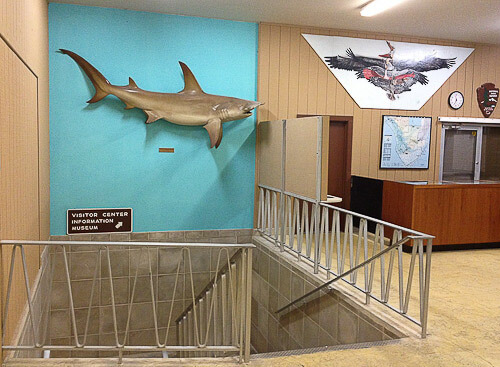 shark taxidermy