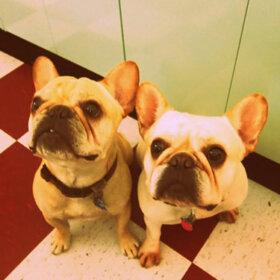 dogs in retro kitchen