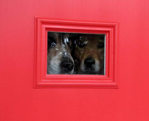 dogs-peeking-out-vintage-door
