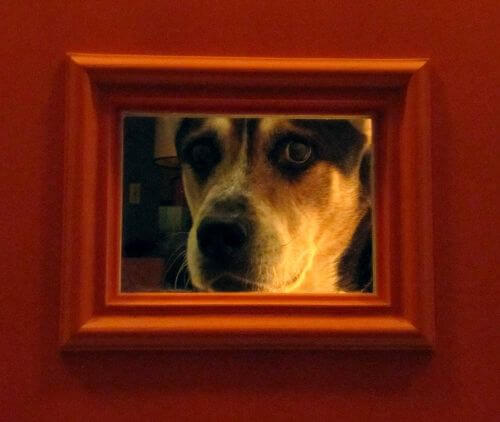 dog-peeking-throug-door