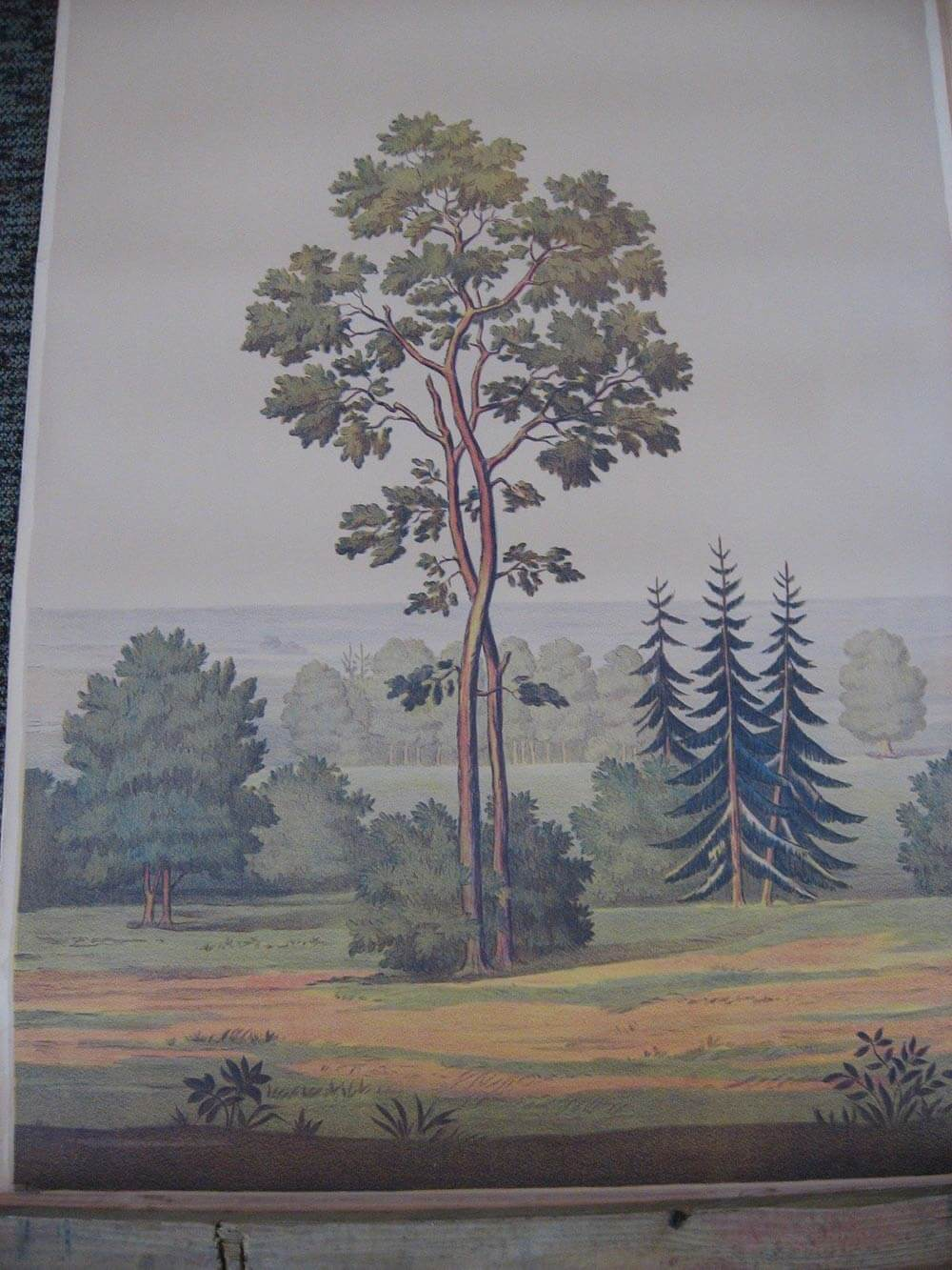 Full Room Vintage Wallpaper Murals By The Schmitz Horning Co