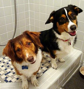 dog-shower